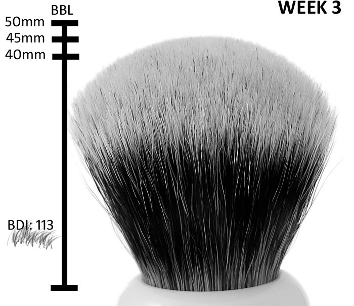 brush week3 Worlds first living shaving brush!