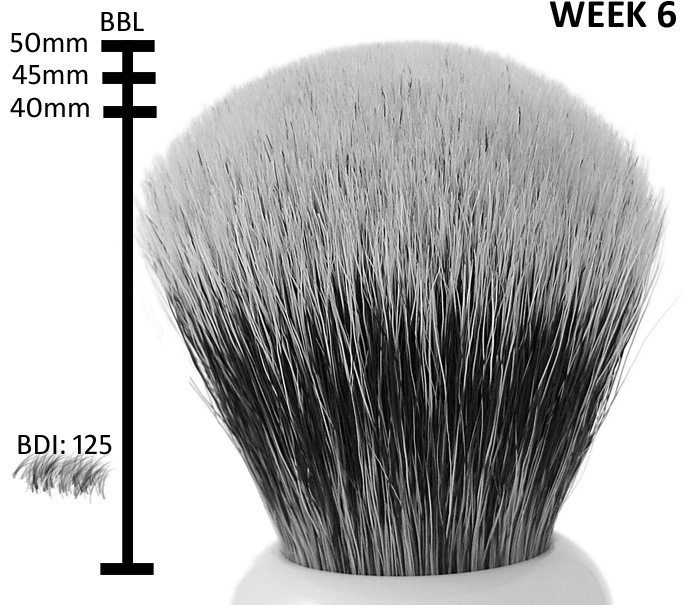 brush week6 Worlds first living shaving brush!